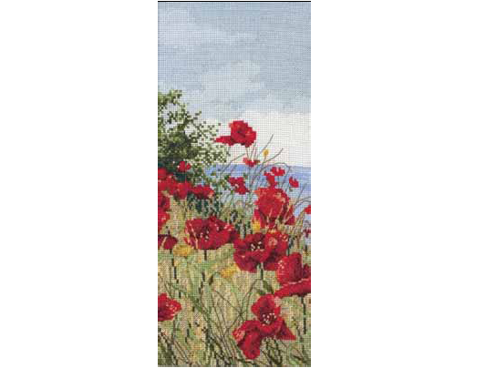 APC416 Clifftop Poppies View